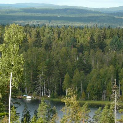 skogsutsikt-fast